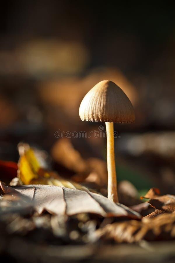 Funghi Selvaggi Immagini Stock
