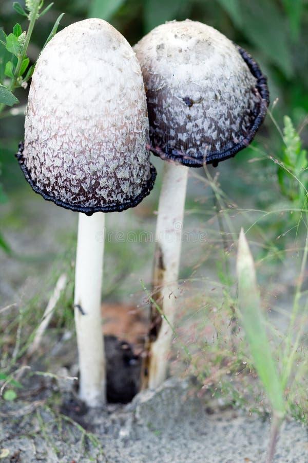 Funghi selvaggi della foresta fotografie stock