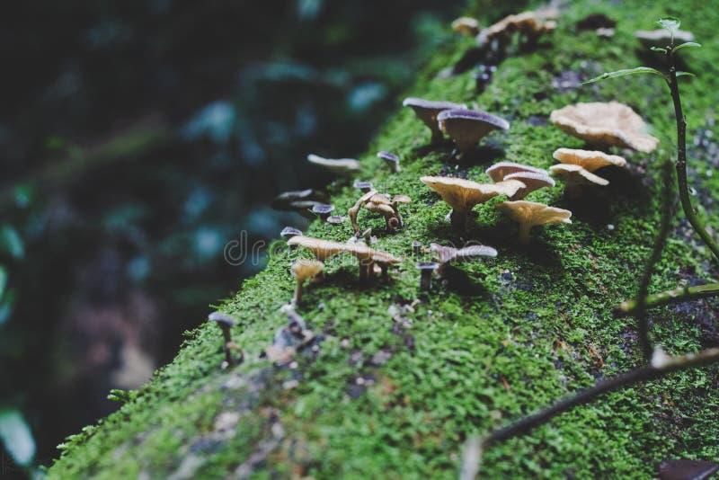Funghi su muschio fotografia stock