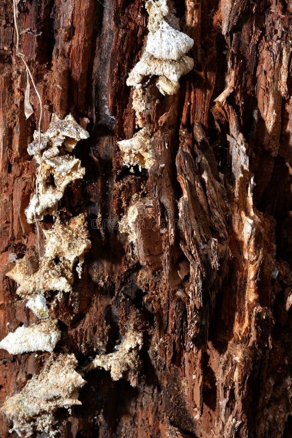 Funghi sull'albero di decomposizione immagini stock