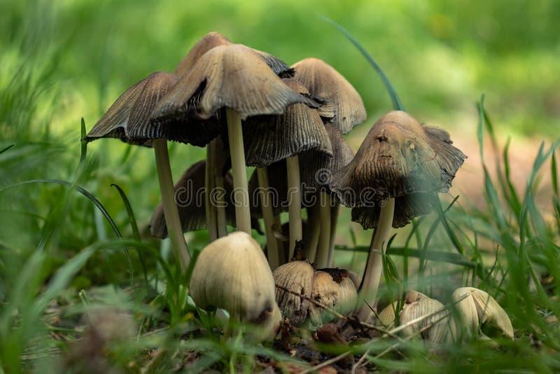 Funghi sull'erba immagine stock