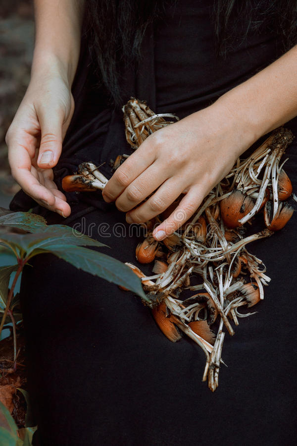 Funghi tossici fotografia stock