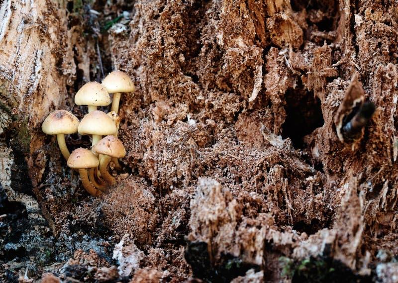Funghi in un albero di decomposizione fotografia stock libera da diritti