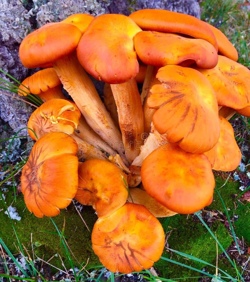 Fungi at base of tree stock photos