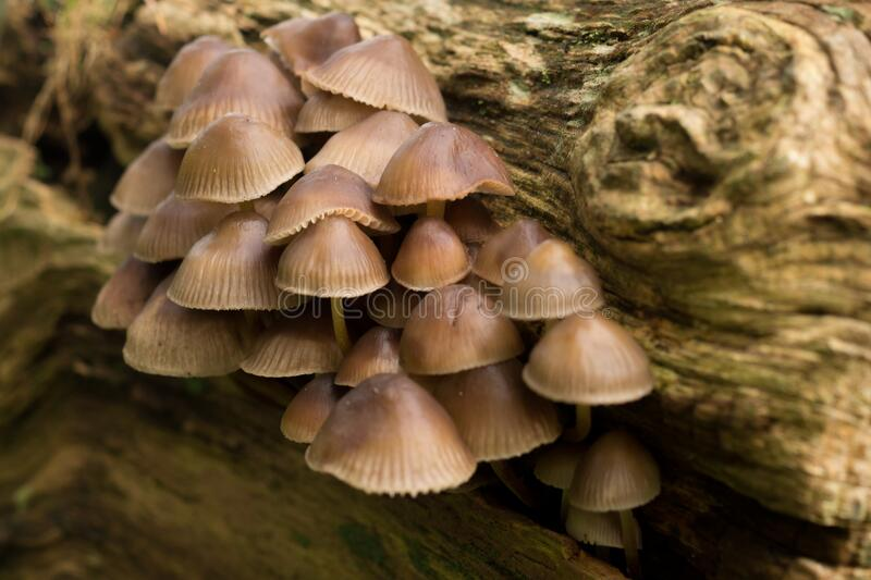 Fungi on dying tree royalty free stock images
