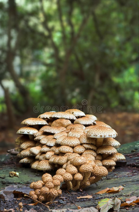 Download Fungi on a trunk stock photo. Image of inedible, danger - 15461220