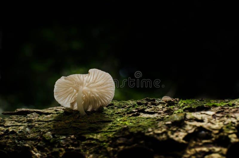 Fungo, Basidiocarp, funghi della Zelanda immagine stock