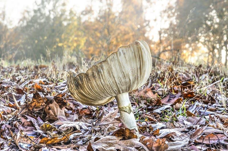 Fungo bianco su uno spazio all'aperto in una foresta fotografia stock libera da diritti