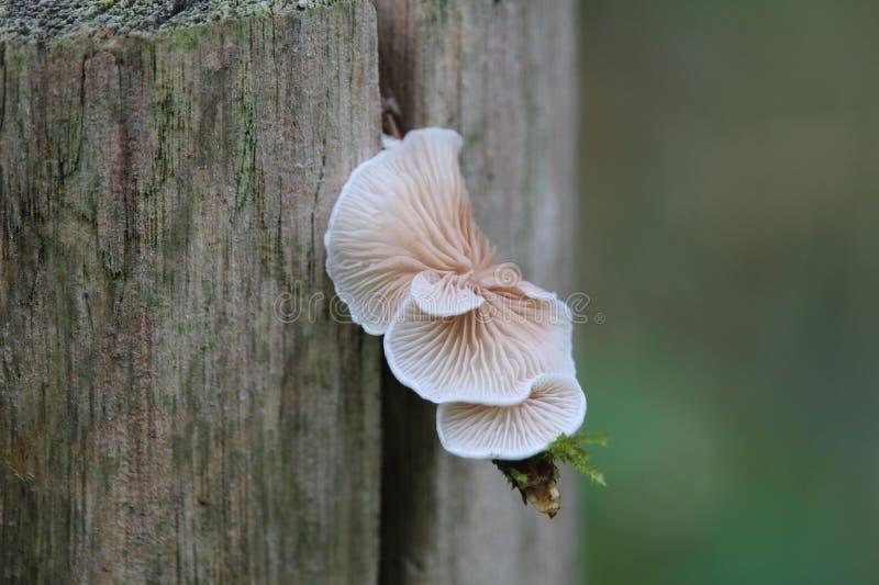 fungo del fungo fotografia stock
