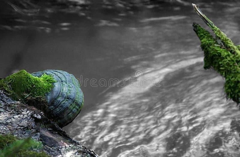Fungo dell'albero sopra un fiume immagine stock libera da diritti