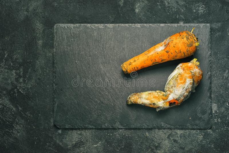 Fungo di muffa in carote fotografia stock