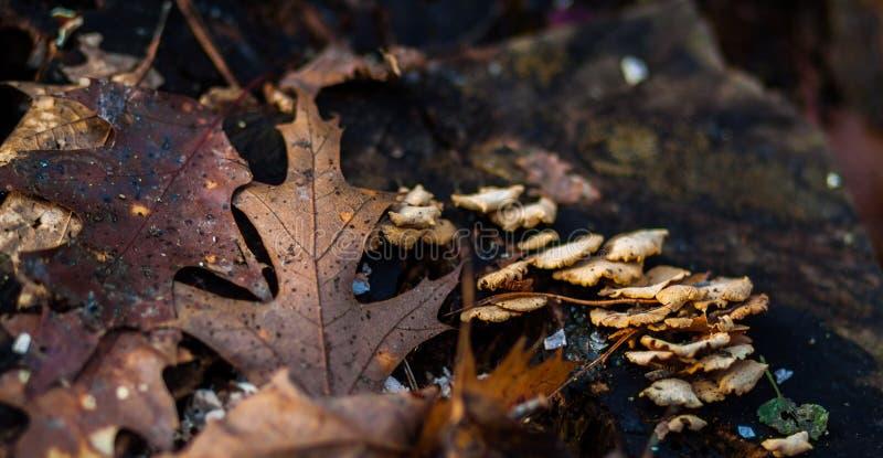 Fungo e foglie di autunno fotografie stock libere da diritti
