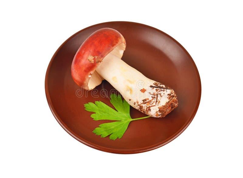 Fungo edulis del boletus in piatto dell'argilla immagine stock