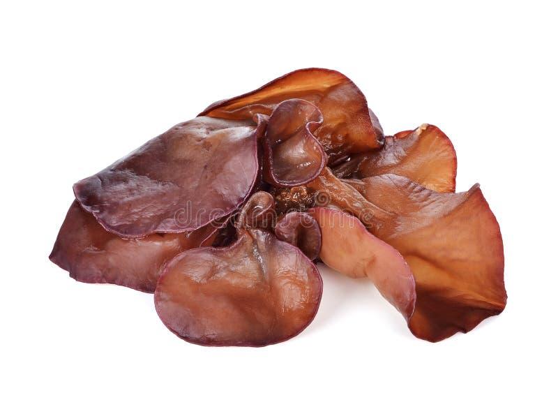 Fungo nero (fungo dell'orecchio dell'ebreo) fotografia stock libera da diritti
