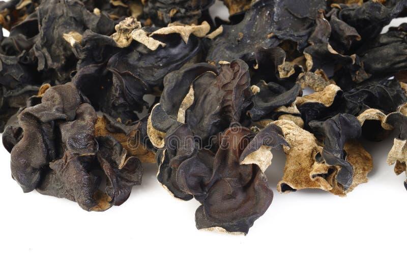 Fungo nero (fungo dell'orecchio dell'ebreo) su fondo bianco immagine stock libera da diritti