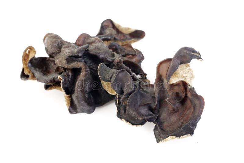 Fungo nero secco (fungo dell'orecchio dell'ebreo) su bianco immagini stock libere da diritti