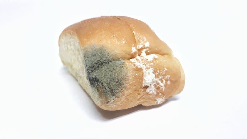 Fungo no pão expirado imagens de stock royalty free