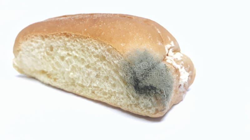 Fungo no pão expirado fotos de stock
