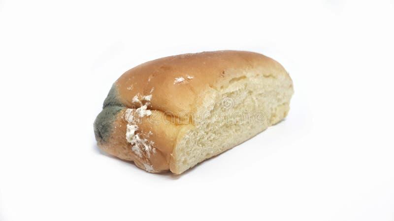 Fungo no pão expirado imagens de stock