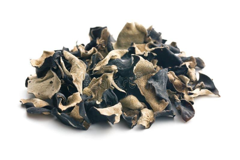Fungo preto chinês secado Orelha da geleia imagem de stock royalty free