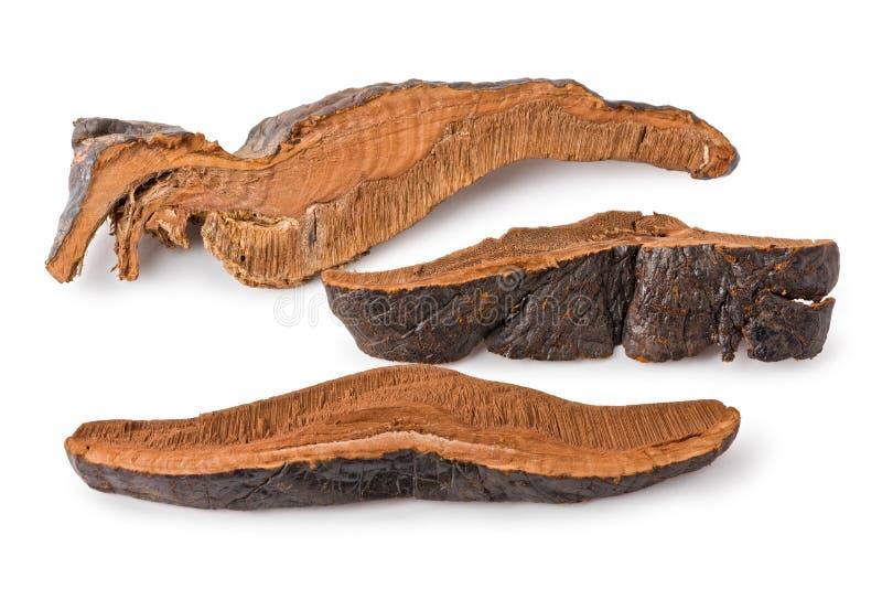 Fungo secco di Lingzhi (lucidum di Ganoderma) immagine stock libera da diritti