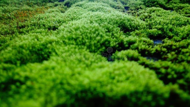 Fungo verde fotografia de stock royalty free