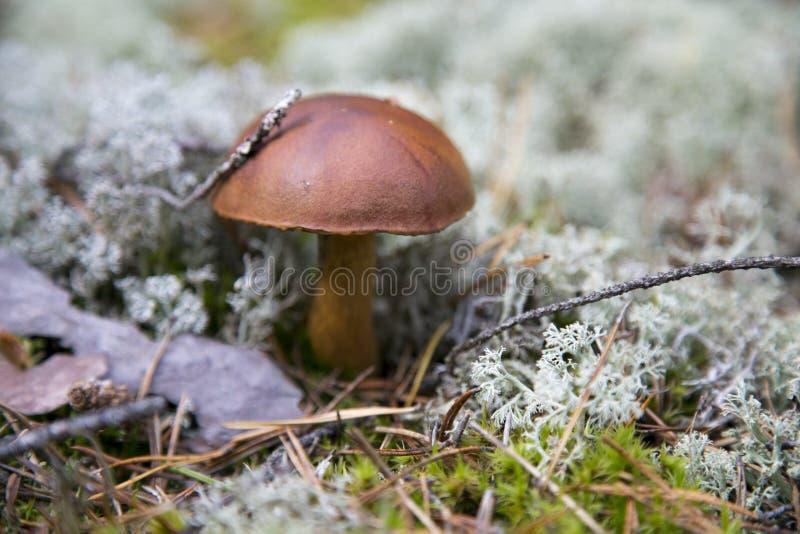 fungos imagem de stock