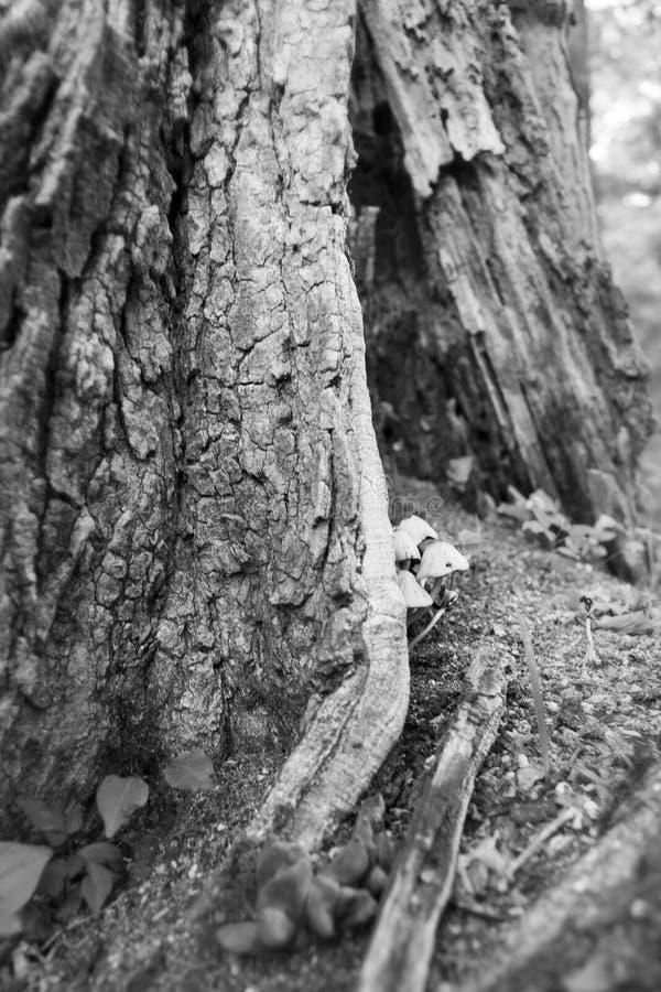 Fungos da árvore de floresta fotos de stock