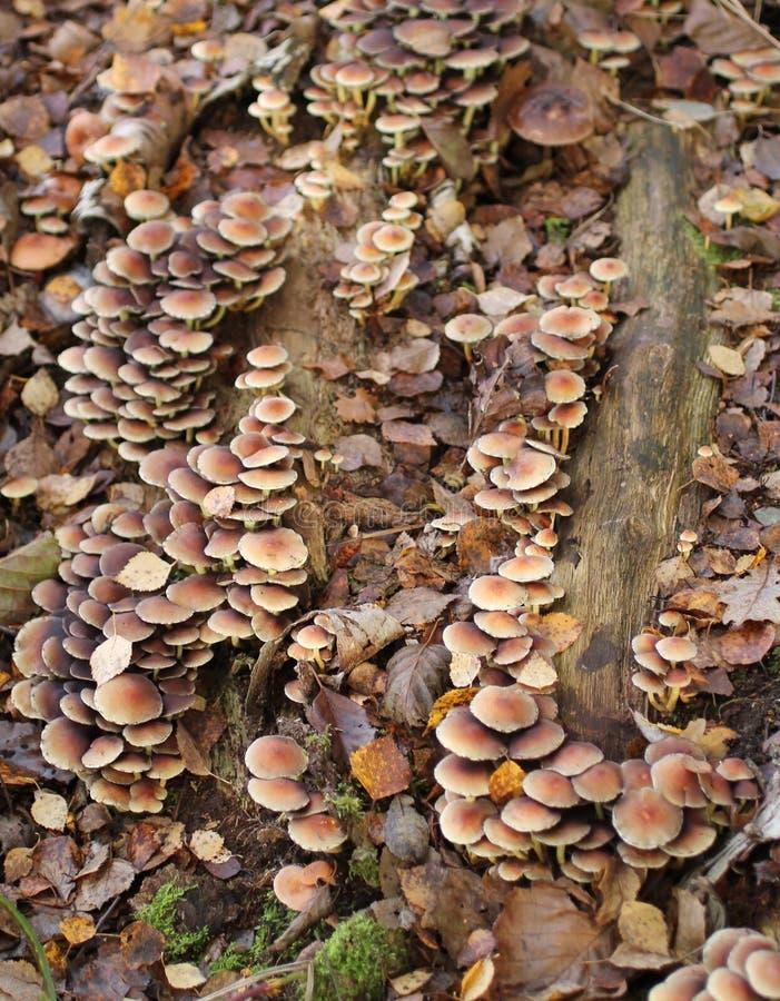 Fungos da floresta imagem de stock royalty free