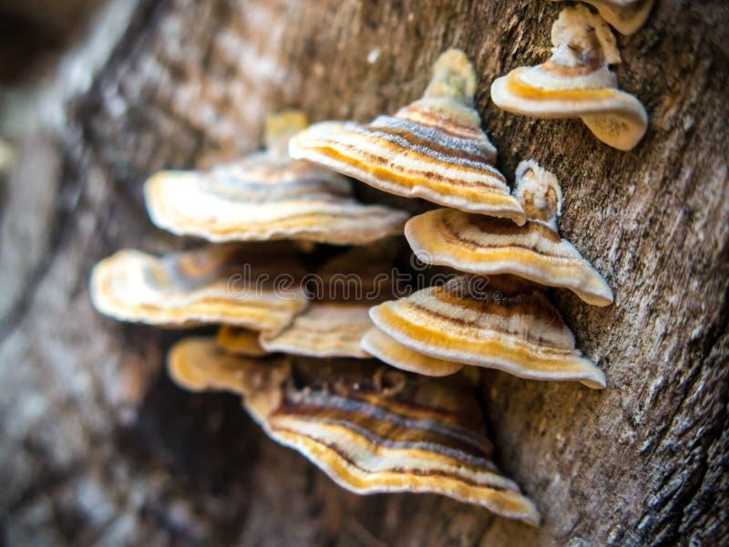 Fungos de suporte fotos de stock