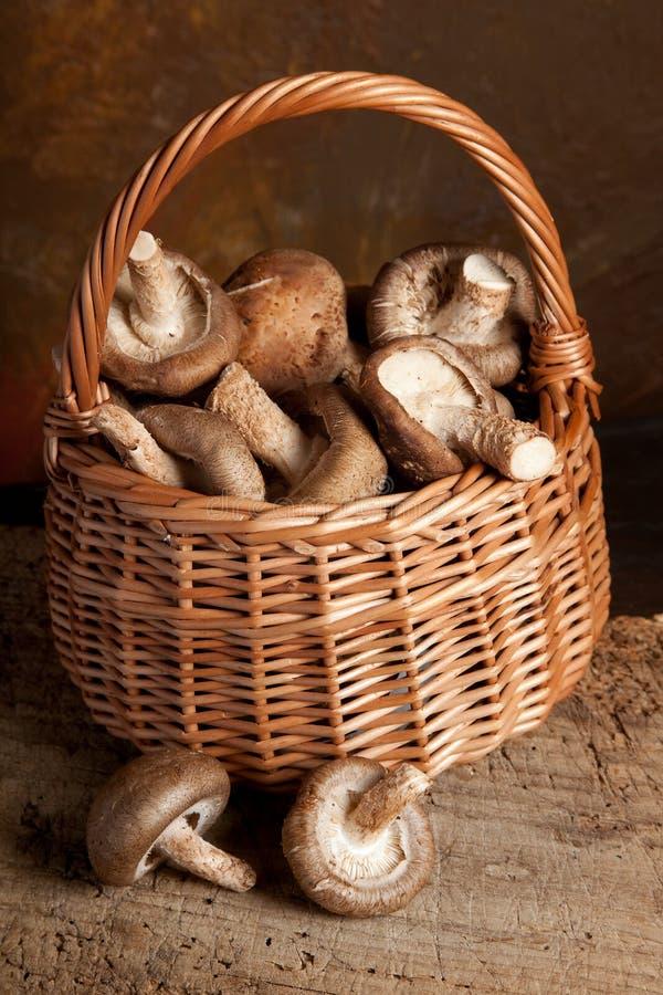 Fungos em uma cesta fotografia de stock royalty free