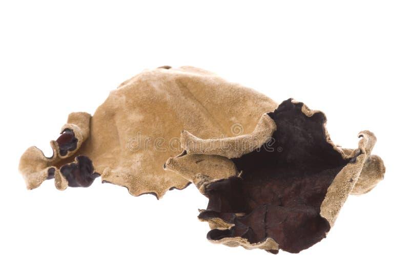 Fungos secados comestíveis macro imagem de stock