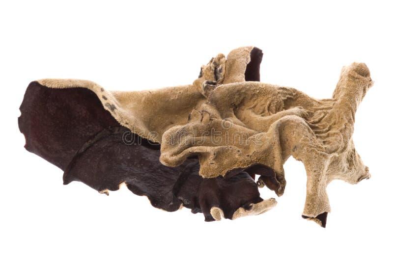 Fungos secados comestíveis macro imagem de stock royalty free