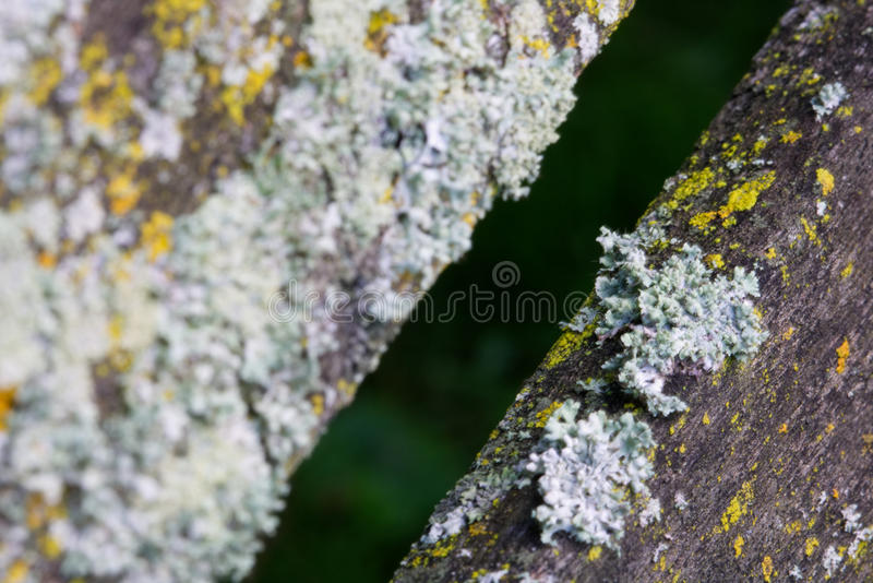 Fungus stock photos
