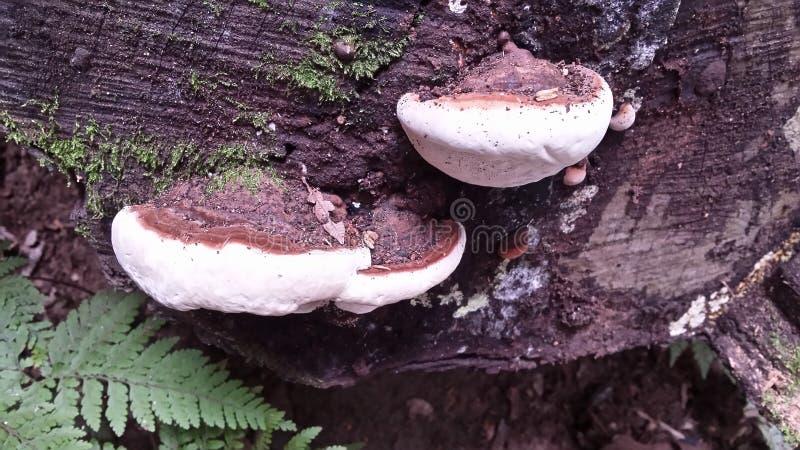Fungus royalty free stock photos