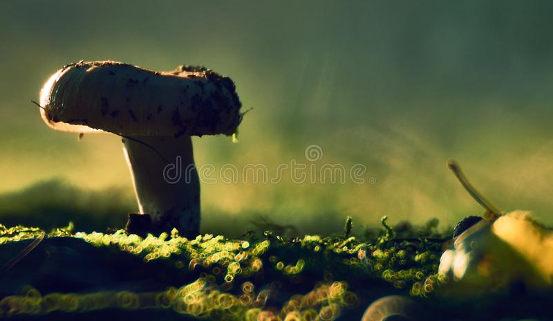 The fungus in the green forest bedding creates a contrast with the background. Green and yellow prevails. The background is blurred royalty free stock image