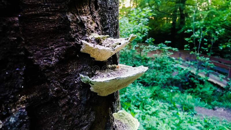 Growing fungus royalty free stock photography