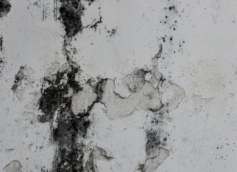 Fungus sobre fondo de pared blanca con la superficie rota sobre hormigón fotos de archivo libres de regalías