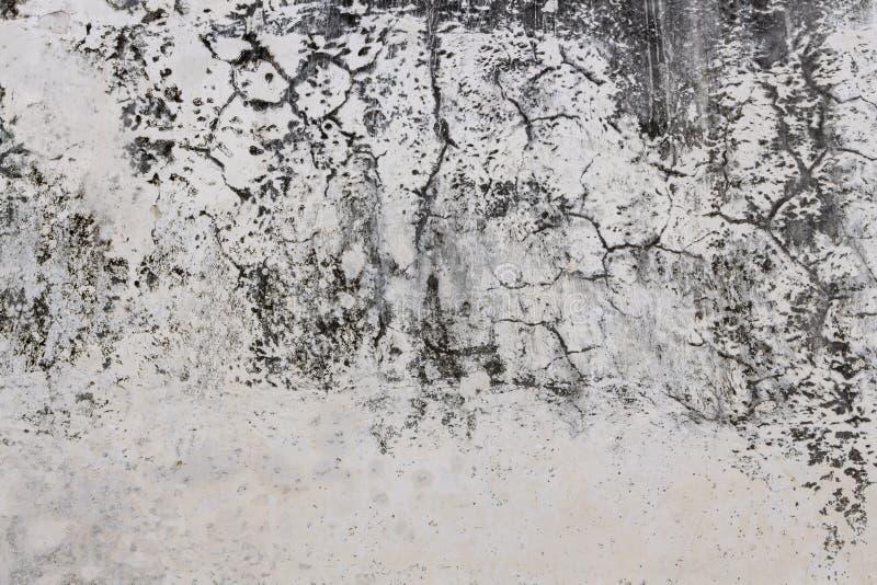 Fungus sobre fondo de pared blanca con la superficie rota sobre hormigón fotos de archivo