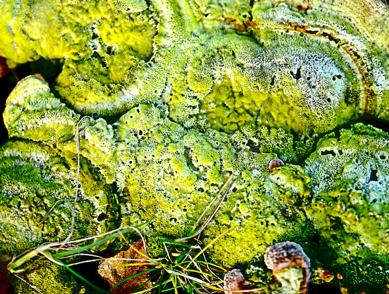 Download Fungus textured background stock photo. Image of macro - 40354038