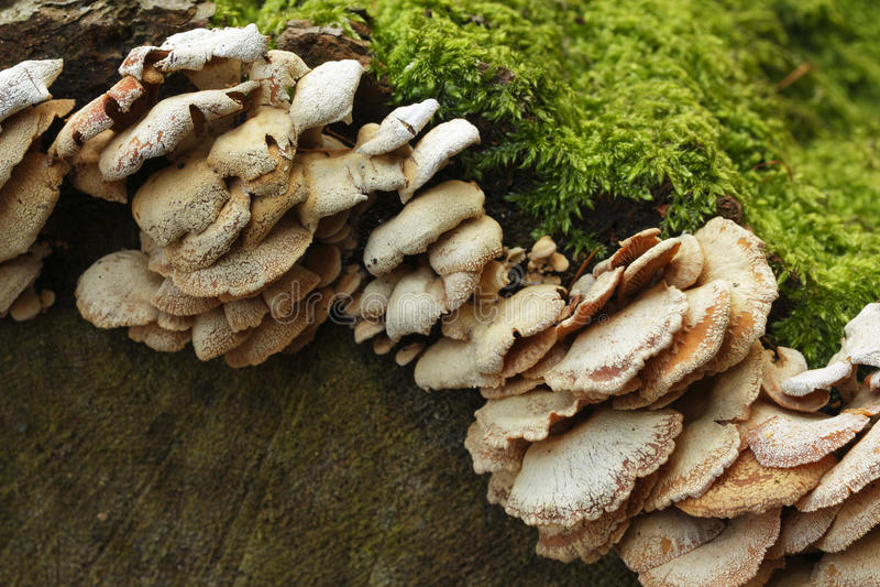 Fungus on the tree stock image