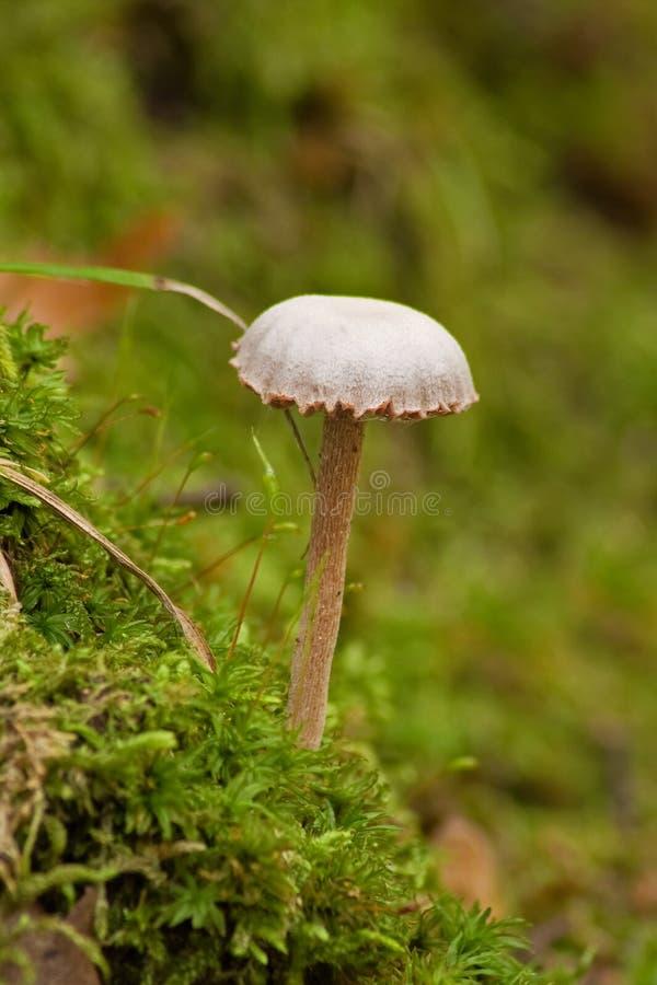 Download Fungus stock photo. Image of danger, brushwood, color - 30221394