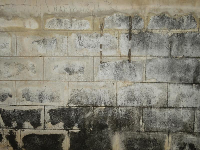 Fungus on the wall. How does the fungus cause adverse health effects? When the mold in the house is large enough, it will create spore and cause symptoms such as stock images
