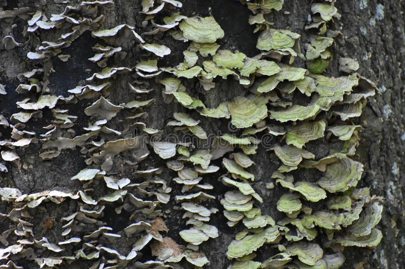 Fungus. This was taken in Mineral Wells State Park stock photography