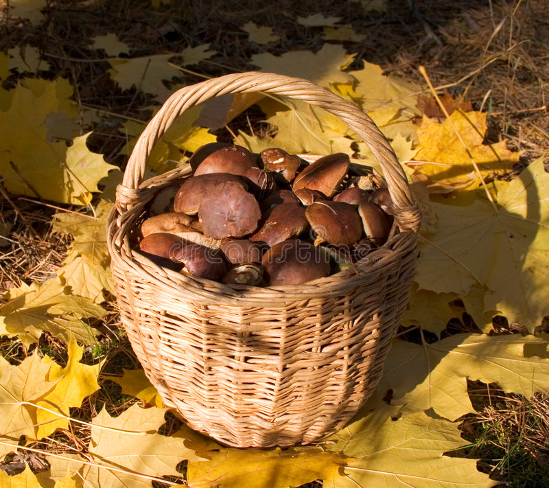 Free Funguses In Frail Royalty Free Stock Photography - 3035347