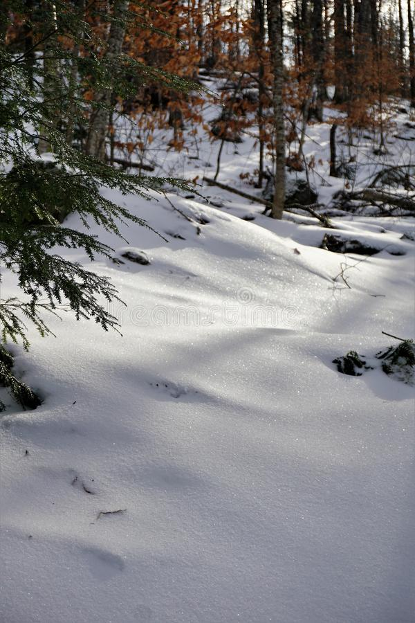 Funkelnde Kruste von magischen ursprünglichen Schneefällen lizenzfreie stockfotos