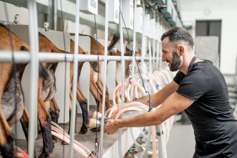 Funktionierende Melkmaschine des Mannes am Ziegenbauernhof stockfotografie