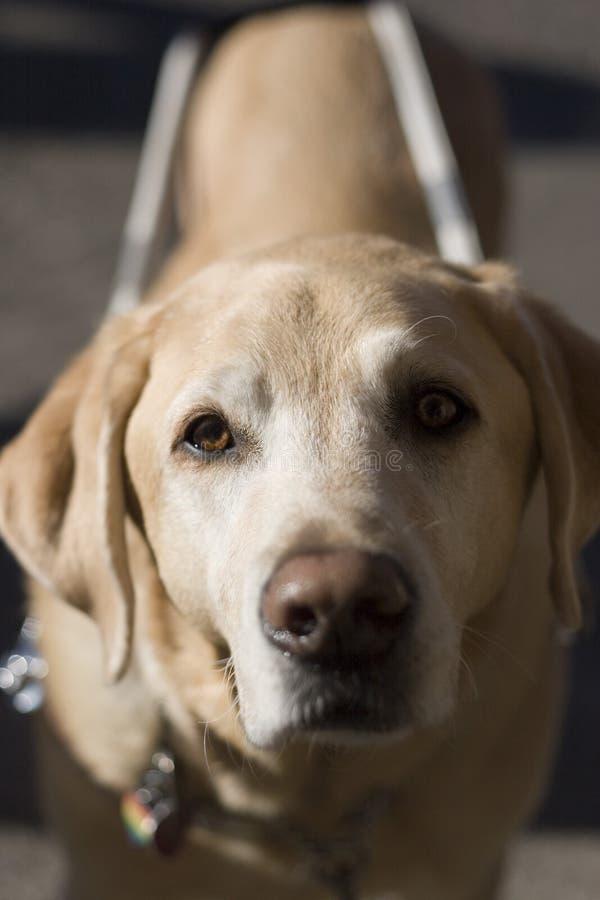 Funktions-Hund stockfotos