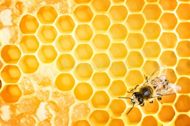 Funktionsdugligt bi