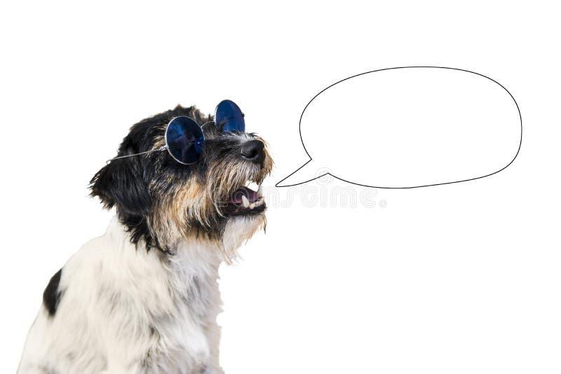 Funn dog with empty speech bubble. Cute dog with empty speech bubble - jack russell terrier stock photos